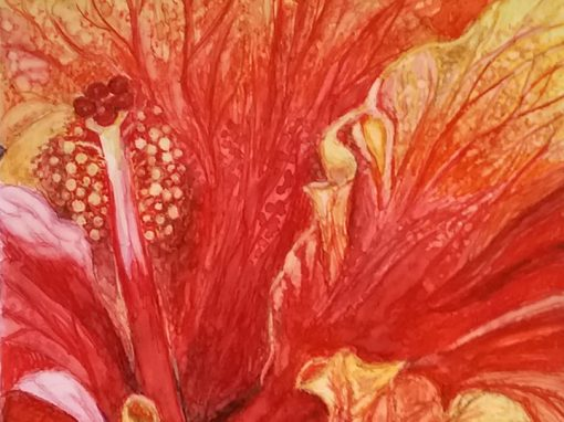Lamberton Hibiscus