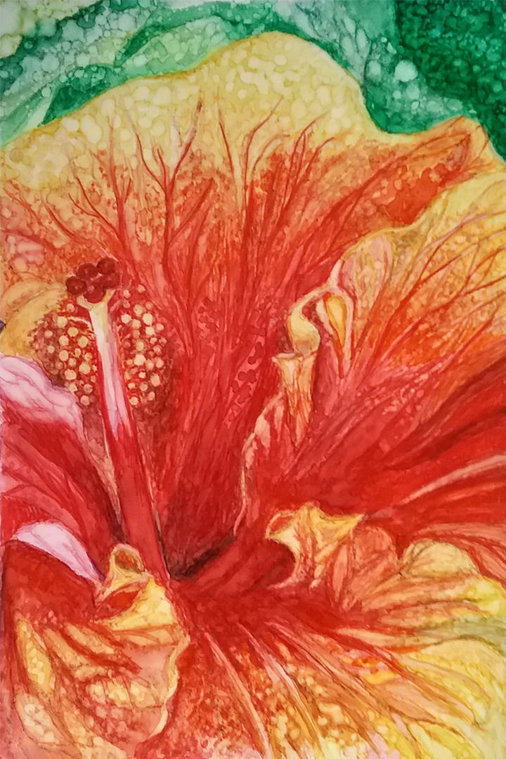 """Lamberton Hibiscus"" by Marilyn Nosky"
