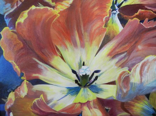 Tulips Up Close