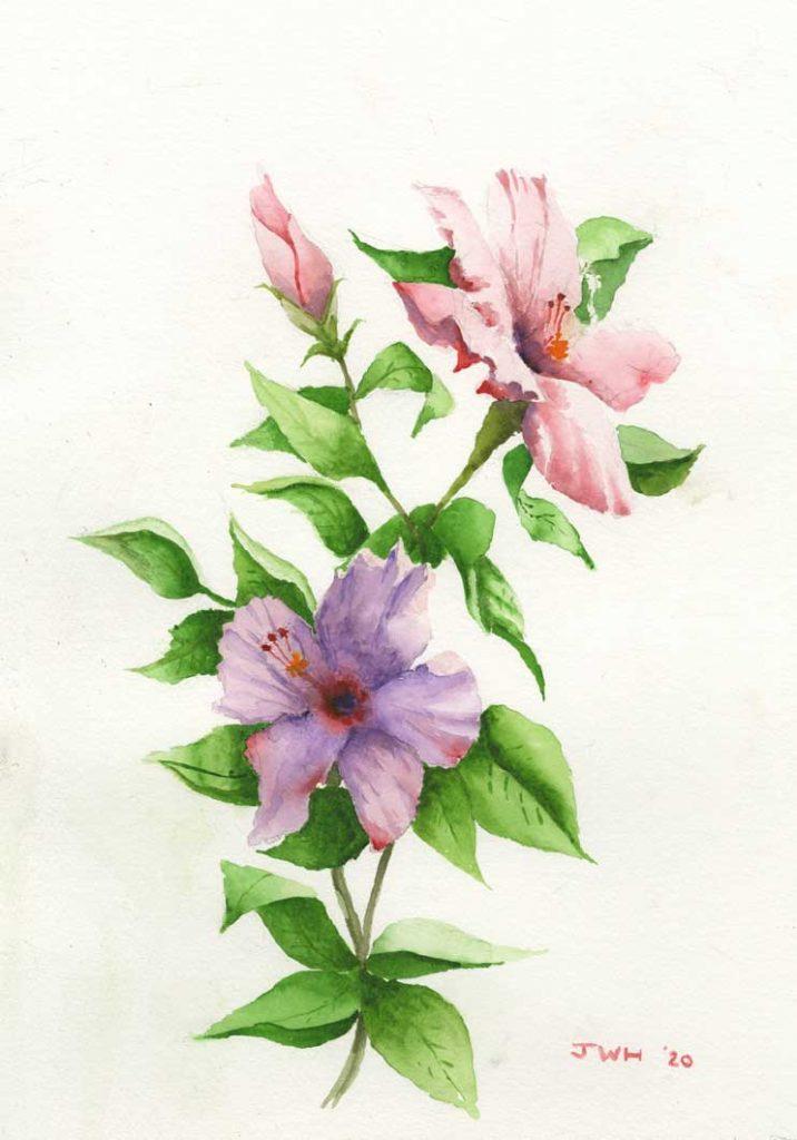 """Happy Hibiscus"" by John Heister"