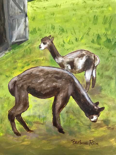 """Alpacas"" by Barbara Rice"